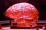 Brain. Click here to return to the characters index